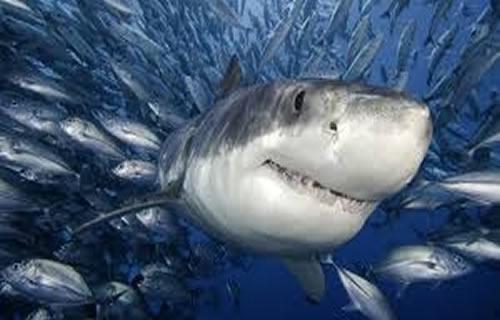 tiburon tableselection