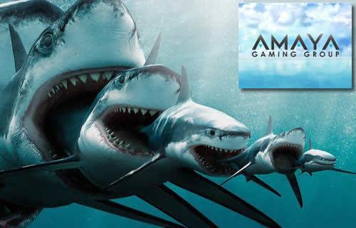 amaya shark